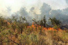 جنگل در آتش