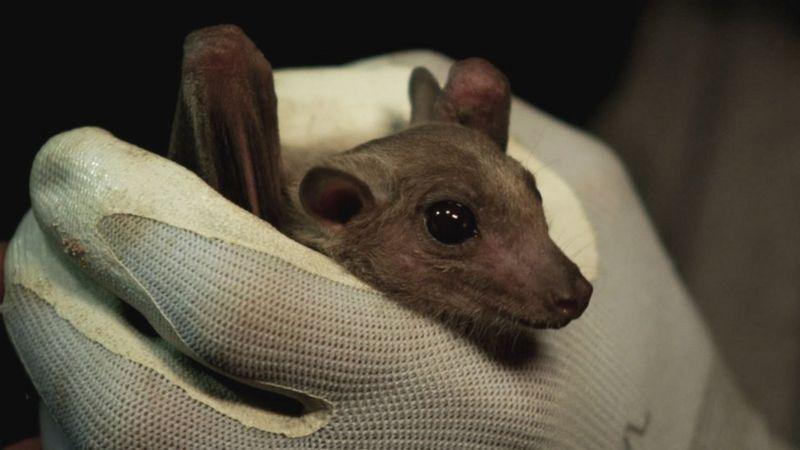 خفاشها را مقصر ندانید