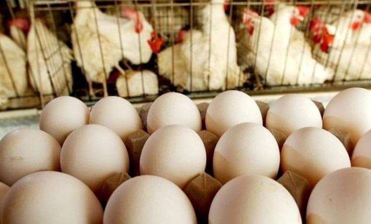 بازی مرغ و تخم مرغ در سفره معیشتی مردم