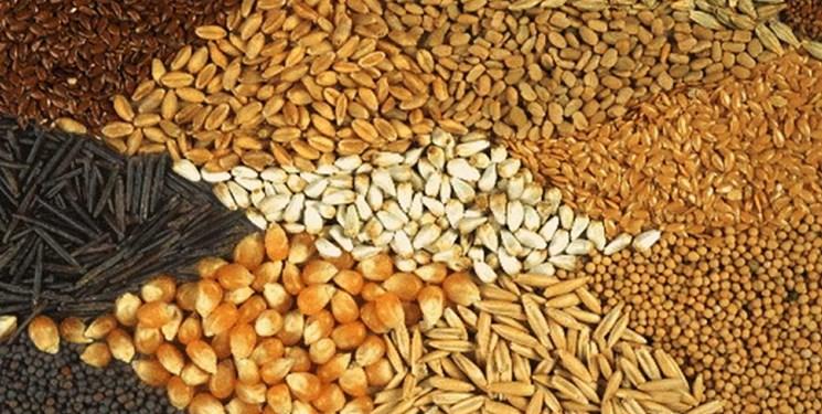 قیمت خوراک دام در بازارهای جهانی افزایش یافت